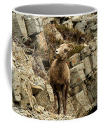 Big Horn On The Rocks Coffee Mug