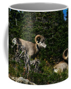 Big Horn Sheep Glacier National Park Coffee Mug