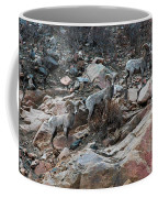 Big Horn Sheep3 Coffee Mug