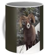 Bighorn Sheep, Maligne Canyon, Jasper Coffee Mug