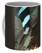 Black And White Anemone Fish Looking Coffee Mug by Mathieu Meur