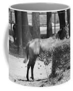 Black And White Hay Horse Coffee Mug