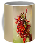 Black And Yellow Garden Spider 1 Coffee Mug