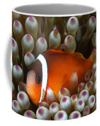 Black Anemonefish, Fiji Coffee Mug