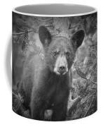 Black Bear Cub In A Pine Tree Coffee Mug