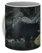 Black Bear With Her Young Cub Tagging Coffee Mug