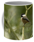 Black-capped Chickadee With Branch Bokeh Coffee Mug