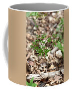 Black Cohosh Coffee Mug