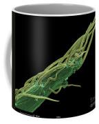 Black Locust Thorn, Sem Coffee Mug