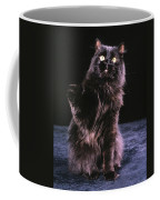Black Persian Cat Reaches Coffee Mug