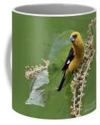 Black-thighed Grosbeak 2 - Dp Coffee Mug