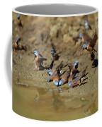 Black-throated Finches At Waterhole Coffee Mug