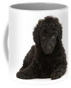 Black Toy Poodle Pup Coffee Mug