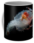 Blind Lobster Coffee Mug