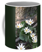 Bloodroot Coffee Mug