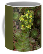 Blooming Succulents Coffee Mug