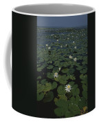 Blooming Water Lilies Fill A Body Coffee Mug