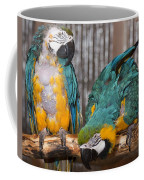 Blue And Gold Macaw Pair Coffee Mug