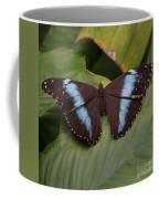 Blue Banded Morpho Coffee Mug