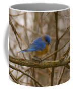 Blue Bird Perched On Willow Coffee Mug