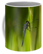 Blue Dragonfly 12 Coffee Mug