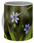 Blue Eyed Grass Coffee Mug