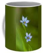 Blue-eyed Grass Wildflower - Sisyrinchium Angustifolium Coffee Mug