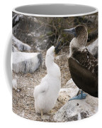 Blue-footed Booby Mother And Chick Coffee Mug