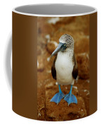 Blue-footed Booby Sula Nebouxii Coffee Mug by James P. Blair