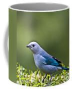 Blue-grey-tanager Coffee Mug
