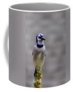 Blue Jay In The Pine Coffee Mug
