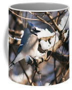 Blue Jay Staying Warm Coffee Mug