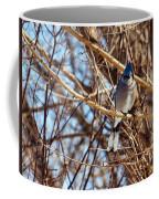 Blue Jay Thinking Coffee Mug