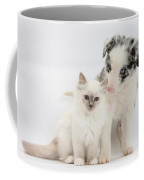 Blue-point Kitten And Border Collie Coffee Mug