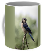 Bluejay - Bird Coffee Mug