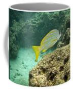 Blueline Snapper Coffee Mug