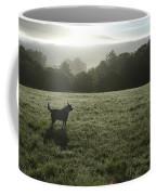 Bolinas, California, United States Dog Coffee Mug by Keenpress
