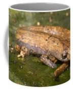Bolitoglossine Salamander Coffee Mug