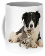 Border Collie And Kitten Coffee Mug