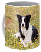 Border Collie In Field Of Yellow Flowers Coffee Mug