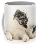 Border Collie Puppy With Rough-haired Coffee Mug