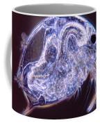Bosmina Coffee Mug