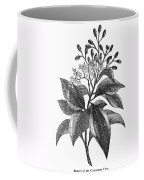 Botany: Cinnamon Tree Coffee Mug