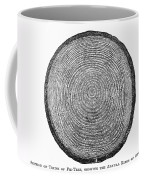 Botany:  Fir Tree Trunk Coffee Mug
