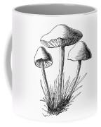 Botany: Mushroom Coffee Mug