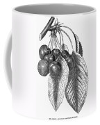 Botany: The Cherry Coffee Mug