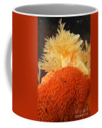 Bowerbanks Halichondria & Spiral-tufted Coffee Mug by Ted Kinsman