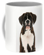 Boxer Pup Coffee Mug by Mark Taylor