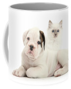 Boxer Puppy And Blue-point Kitten Coffee Mug