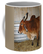 brahma Cow Coffee Mug